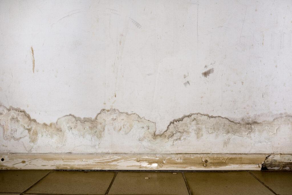 damp dry wall